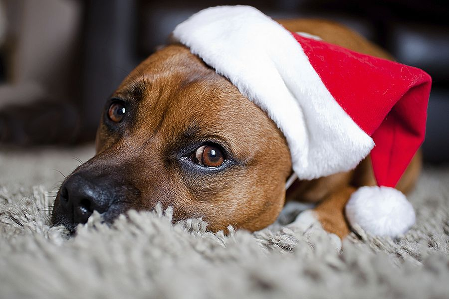 Special Pet Care at Christmas