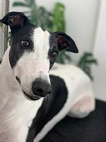 Caringbah Local Recommends Hound Love
